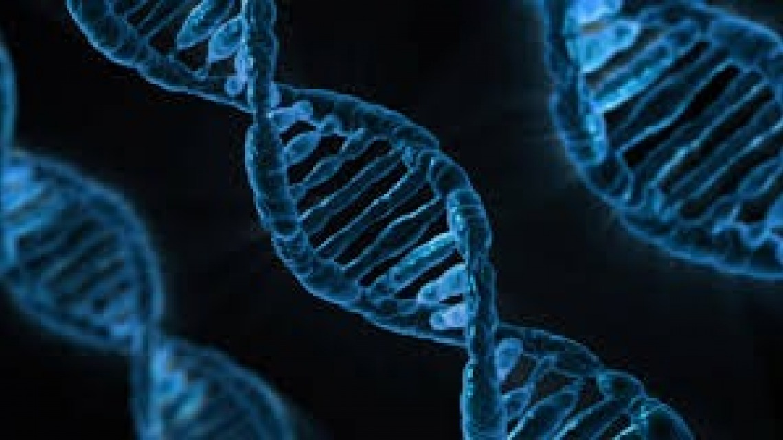 מנגנונים מולקולריים ומעבר סיגנל של החושים הכימיים