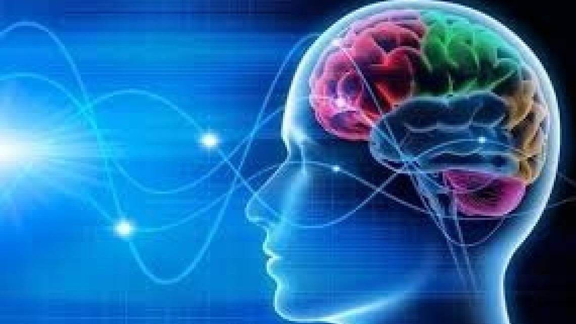 גלי מוח: קוגניציה, ביולוגיה ומה שביניהם